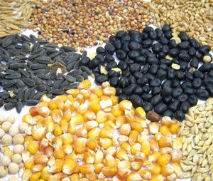 Cereali e Farine